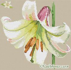 Цветы - Схемы в XSD - Кладовочка схем - вышивка крестиком