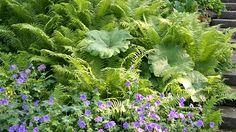 Faszinierende Farne - Mein schöner Garten