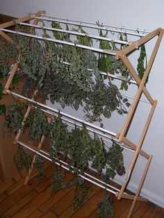 clothes rack for drying herbs....hmm...yes  herbs...