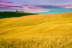 Photograph fields of gold by Anel Alijagić on 500px