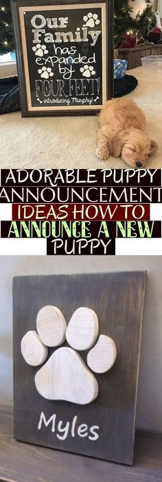 15 Adorable Puppy Announcement Ideas | How to Announce a New Puppy Arrival  Adorable Puppy Announcement Ideas How To Announce A New Puppy Puppy Gifts, New Puppy, Cute Puppies, Announcement, Ideas, Thoughts