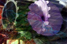 #SPoceania #smashingpumpkins #The Celestials by ~NotAveragePeter on deviantART
