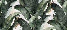 Botany Banana - Tapetit / tapetti - Photowall
