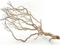 para hacer un centro de mesa con ramas secas