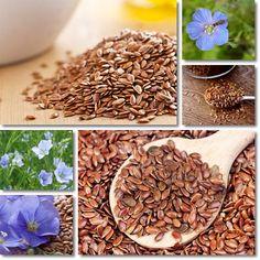 Proprietà semi di Lino | Vitamine Proteine