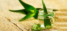 Aloe Vera is one of the most important plants that used in the folk medicines. The healing benefits of aloe Vera were recognized in Ancient Indian. It is traditionally used to heal wounds,swelling and is known for its anti-inflammatory and antibacterial properties.