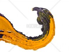 arched pumpkin - Arched neck of a colourful gourd pumpkin.