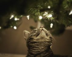 cats and kittens with christmas tree Christmas Animals, Christmas Cats, White Christmas, Christmas Lights, Merry Christmas, Christmas Loading, Christmas Trees, Crazy Cat Lady, Crazy Cats