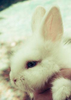 słodki króliczek <3