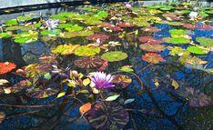 Today's Little Ditty: Haiku Garden: Sydell Rosenberg, guest post by Amy Losak