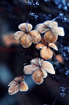 Novemberfrost | Flickr - Photo Sharing!
