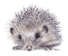 Image result for hedgehog sketches drawings