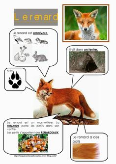 Printable page about le renard Animal Activities For Kids, Science For Kids, Science And Nature, Animals For Kids, French Education, Animal Habitats, Preschool Curriculum, Montessori Materials, Animal Facts