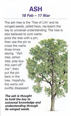 Celtic Tree Astrology – Ash – Feb 18 – Mar 17 – Witches Of The Craft® Garden Trees, Trees To Plant, Ash Tree, Herbal Magic, Celtic Tree, Celtic Crosses, Healing Herbs, Plantation, Book Of Shadows