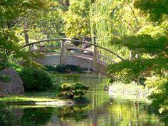 Qué es un jardín japonés y cuáles son su plantas típicas...