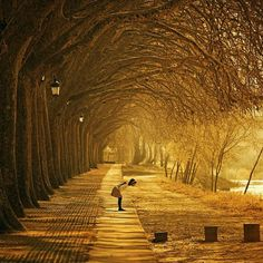 #photography Ponte de Lima's Avenida dos Plátanos Portugal   Photography by Luis Valadares http://pic.twitter.com/LRWo0cF2WH  Piclogy (Piclogy)   Ph0t0graphy (@Ph0t0graphy_123) August 23 2016
