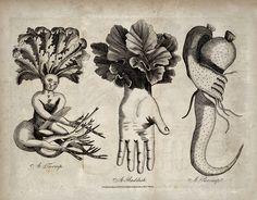 scary-vegetables-kirby1.jpg (1024×801)