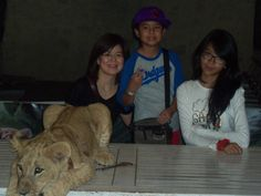 with sleeping lion in secret zoo