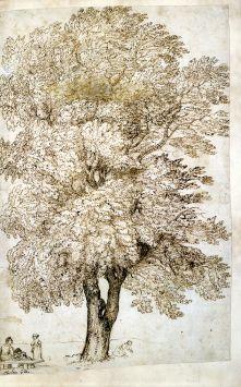 Claude Gellée dit le Lorrain, Etude d'arbre, encre brune, Avignon, Musée Calvet
