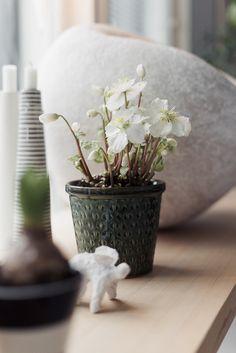 Vaihteeksi kotijoulu – ja se tietää kukkasia Vase, Plants, Christmas, Home Decor, Xmas, Decoration Home, Room Decor, Navidad, Plant