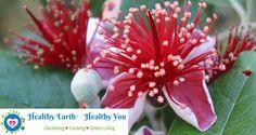 Busch-LIVE! 4. Mein neuer Blog, allerdings auf Englisch: Healthy Earth - Healthy You. Alles über Garten, Kochen und Grünes Leben! Schau doch mal rein!