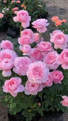 Good Morning Beautiful Flowers, Beautiful Flowers Images, Beautiful Photos Of Nature, Beautiful Flowers Wallpapers, Flower Images, Flower Pictures, Amazing Flowers, Beautiful Roses, Pretty Flowers