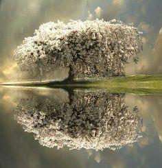 Cresci come un albero. Saldo e forte. Offri riparo e ombra a chi ne ha bisogno, dona i tuoi frutti a chi ne cerca. Cresci come un albero, fermo nel suo essere ma in eterna crescita. - See more at: http://lebuoneabitudini.com/2010/05/cresci-come-un-albero/#sthash.T7O0YNu9.dpuf