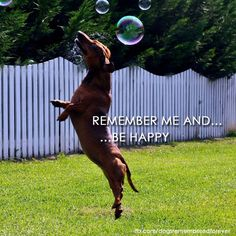 Remember them and be happy. {I am so blessed to have loved so many fur-babies. Until we meet again... I will remember you and you will live forever in my heart