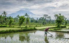 Découvrir Bali et sa culture dans cet article