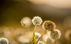 @Photo2Inspire: A Bee by SungjinAhn #animals on 500px