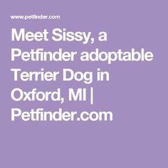 Meet Sissy, a Petfinder adoptable Terrier Dog in Oxford, MI | Petfinder.com