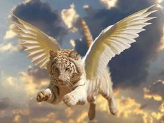 A white winged tiger