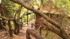 Jungle life in Cambodian.