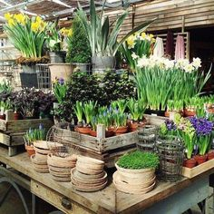 Terrain at Styer's Garden Nursery, Plant Nursery, Front Garden Landscape, Garden Landscaping, Garden Center Displays, Garden Centre, Flower Shop Interiors, Flower Shop Design, Bush Garden