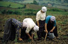 Anadolu'dan Kadın Resimleri Posture Stretches, Palestine History, Posture Collar, Turkish Men, Farms Living, Working People, World Peace, Science Art, Country Life