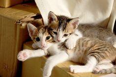 120 Ideas De Artículos Sobre Gatos Gatos Razas De Gatos Criadero