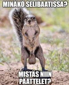 Fox, Humor, Memes, Funny, Animals, Pastor, Animales, Animaux, Humour