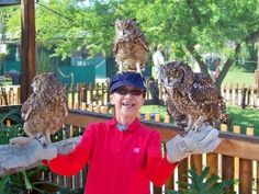 City Pass gives you access to the top attractions in Cape Town, boasting more things to do than any other city pass offering. See our attractions online! Owl Photos, City Pass, Beautiful Owl, Cute Owl, Bird Watching, Cape Town, South Africa, Wildlife, Eagle