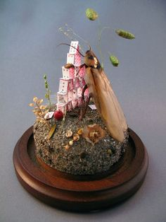 Cockroach Building House of Cards, insect diorama by Lisa Wood