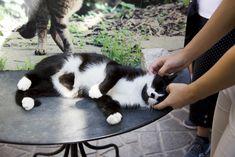 Cuddle buddy at Torre Argentina Roman Cat Sanctuary In Rome