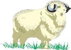 merino sheep photo free - Google Search