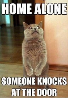 Home Alone. Someone Knocks At The Door funny lol humor funny pictures funny pics funny images funny animal pictures funny animal memes really funny pictures funny pictures and images funny animal captions funny animal pics with captions Memes Humor, Funny Animal Memes, Cute Funny Animals, Funny Dogs, Funny Humor, Cat Memes Hilarious, Funniest Animals, Pet Memes, Funny Pranks