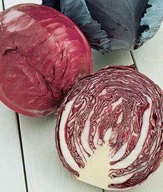 RAINBOW GARDEN - Cabbage (Red)