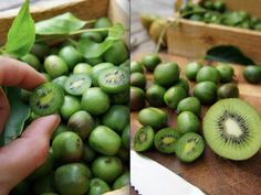 Kiwi 'Issai' or Chinese Gooseberry is a hardy perennial kiwi with exceptionally sweet fruit that are grape-sized. This is a great list of unusual fruit to grow. - Gardening For Life Fruit Garden, Edible Garden, Bonsai Garden, Garden Plants, Potted Plants, Tree Garden, Outdoor Plants, Fruit And Veg, Fruits And Veggies