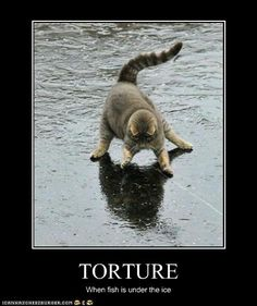 Funny Cats.... Grammar when fish are under the ice not is