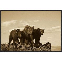"""Global Gallery Grizzly Bear with Two One-Year-Old Cubs, North America by Tim Fitzharris Framed Photographic Print on Canvas in Sepia Size: 16"""" H x ..."""