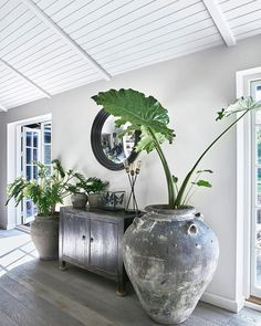 indoor decorative plants to bring freshness; in… indoor decorative plants to bring freshness; home decoration with indoor plants zone Coastal Living Rooms, Coastal Cottage, Coastal Decor, Coastal Farmhouse, Modern Coastal, Discount Furniture, Furniture Outlet, Home Interior Design, Home Decor Ideas