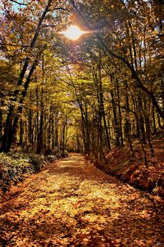 Pathway (Turkey) by Alp Cem on 500px