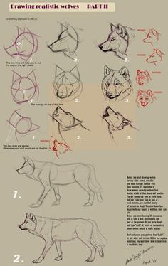 I didn't try it yet, but it looks quite helpful. Wolf Drawings Step by Step | Guides to Drawing Wolves