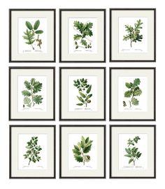 Antiqua Botanical Art Prints oak leaf art botanical print set | Etsy Vintage Botanical Prints, Botanical Wall Art, Art Nouveau Poster, Victorian Art, Leaf Art, Tree Art, Botanical Illustration, Japanese Art, Art Prints